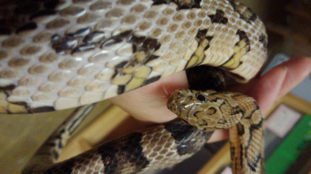 ショップ 蛇 ペット